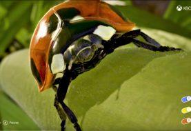 Insects - Mit dieser App erlebt ihr die ganze Power der Xbox One X